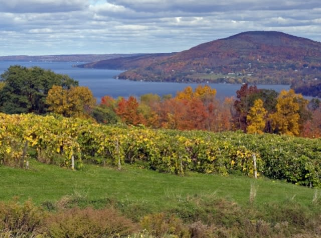 Vineyard along western shore of Canandaigua Lake
