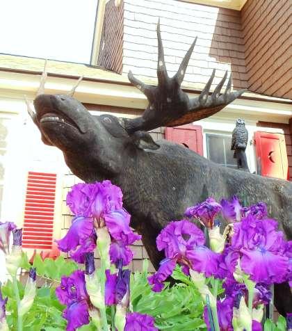 Lodge at Moosehead Lake flowers