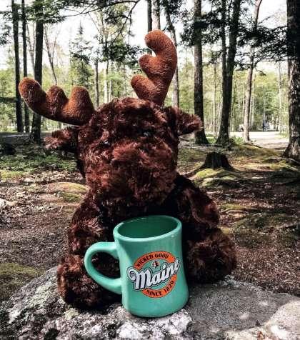 Moose & Coffee