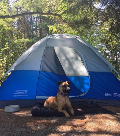 Camping in Lamoine State Park