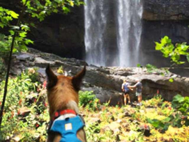 Dog at waterfall
