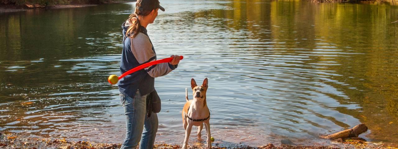 Attractions - Pet Friendly Header
