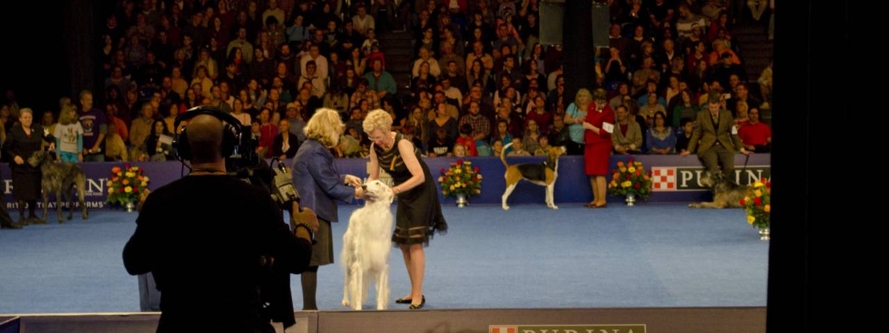 national dog show at philadelphia expo center