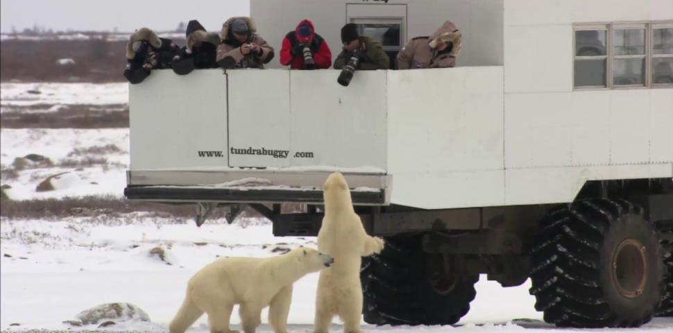 Video Thumbnail - youtube - Churchill Manitoba - The Polar Bear Capital of the World!