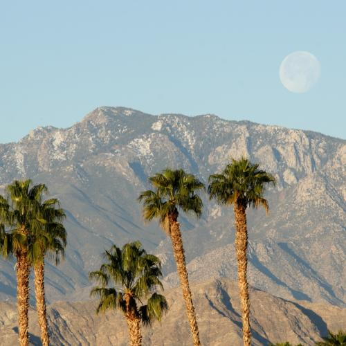 Palm trees with a scenic mountain backdrop.