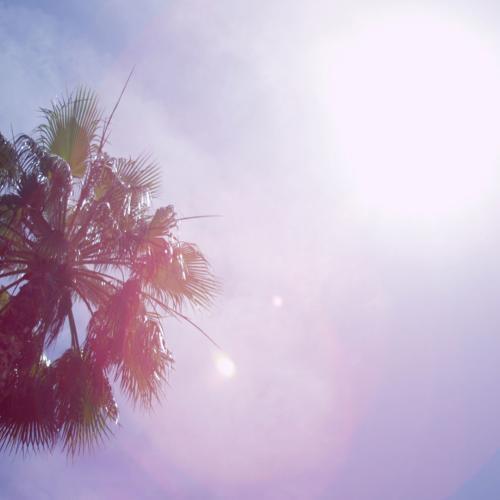new yorkers sun web