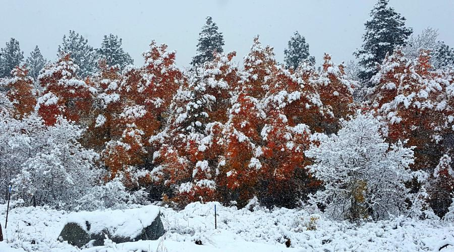 Fall Colors in Winter