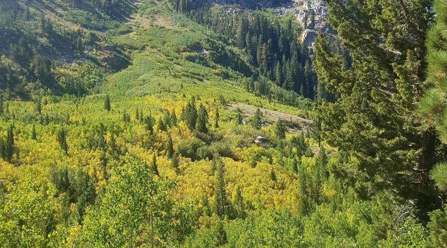 Upper Green Creek Fall Colors