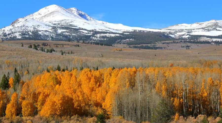 Conway Summit snow and Fall Colors