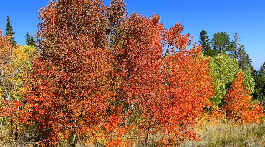 Dunderberg Meadow Road Fall Colors
