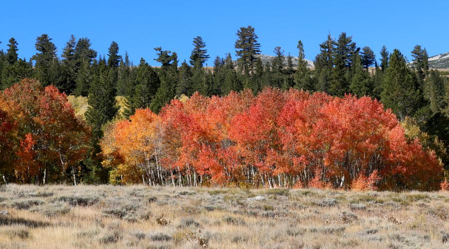 Dunderberg Meadows Road Fall Colors