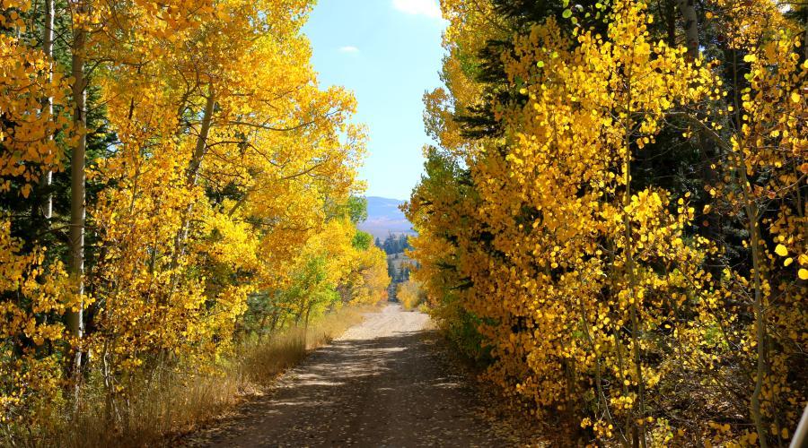 Little Walker River Road