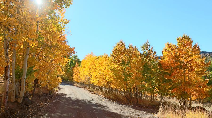 Lobdell lake road fall colors