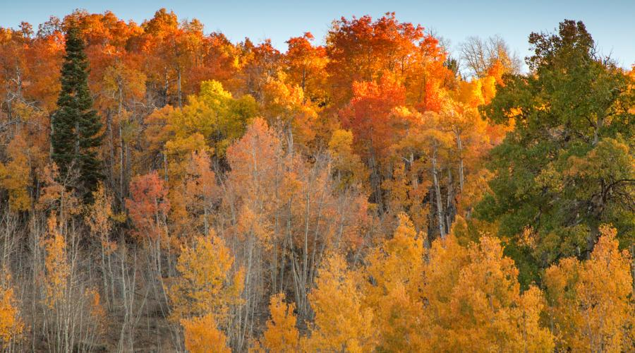 Fall Colors Lobdell Lake Road generic