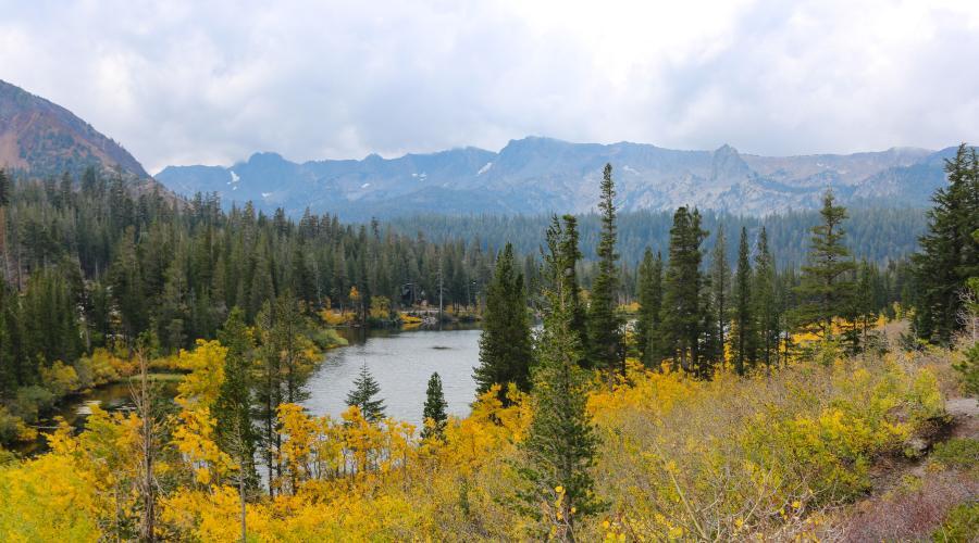 Mammoth Lakes Basin Fall Colors