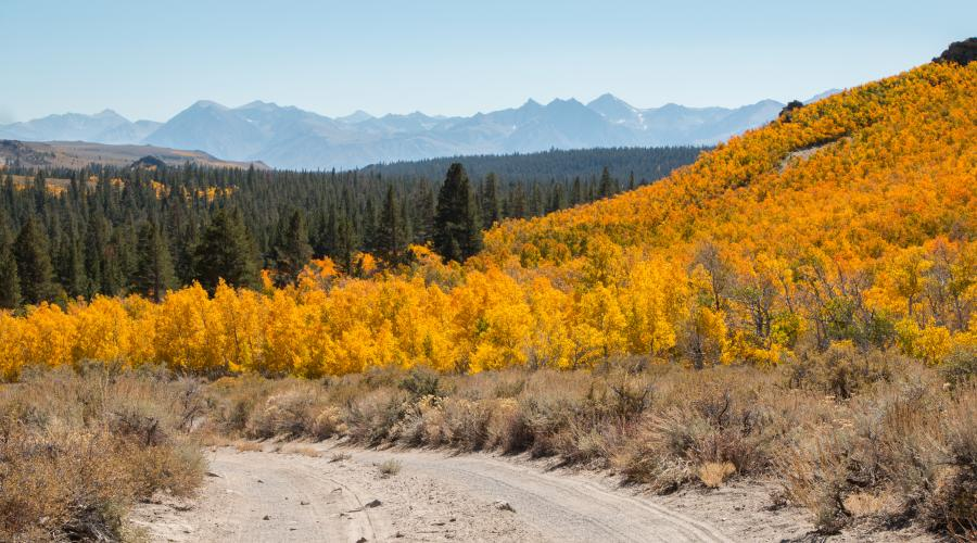 Sagehen Summit Road