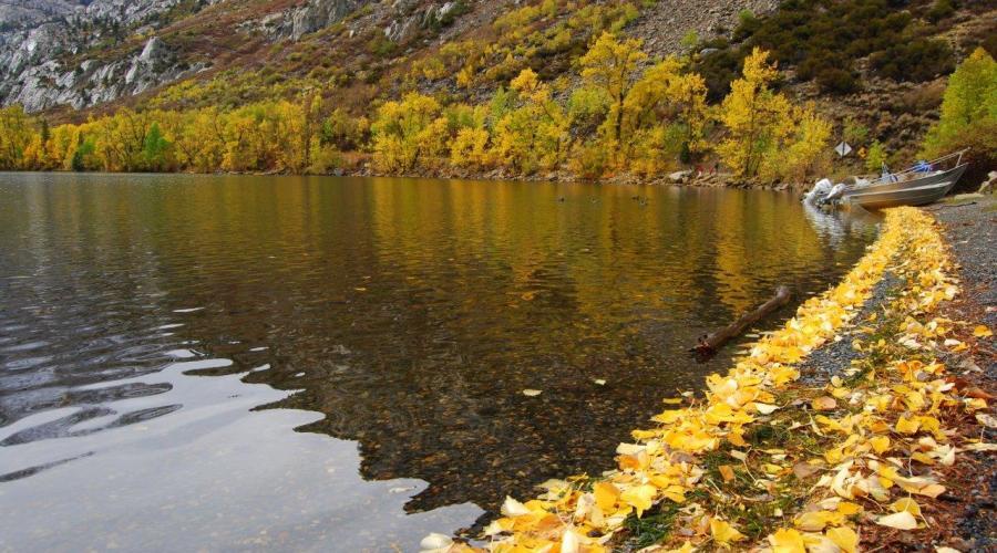 Silver Lake Leafy Shore