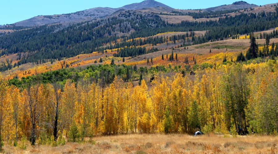 Summers Meadow Road Fall Colors