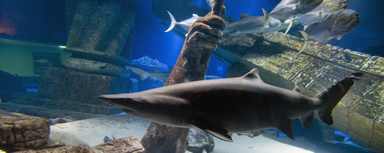 Atlantis Marine World Aquarium 249