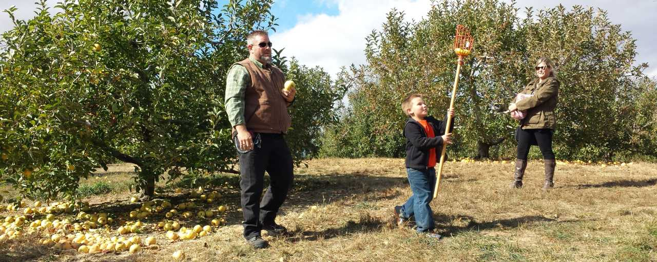 Apple Picking at Anderson Orchard