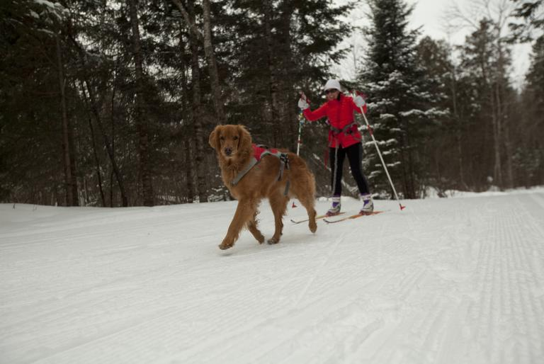 Skier with dog