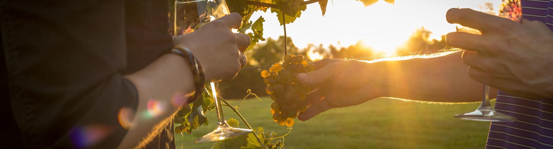 Two people drinking wine in Hershey vineyard