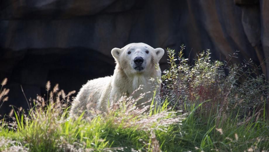 7 things you didn t know about lincoln park zoo