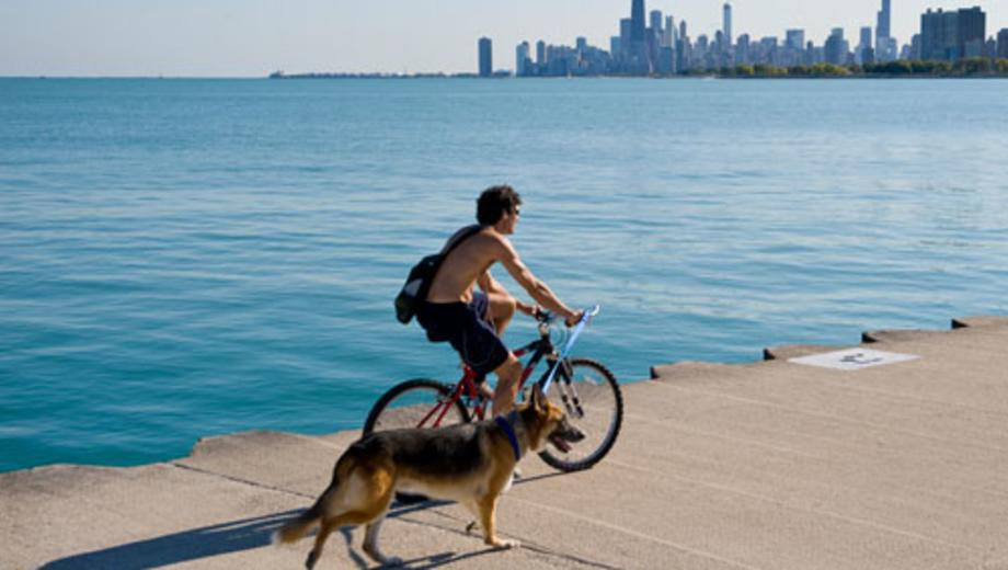 The Dog Friendly Field Guide A Perfect Chicago Weekend With Your