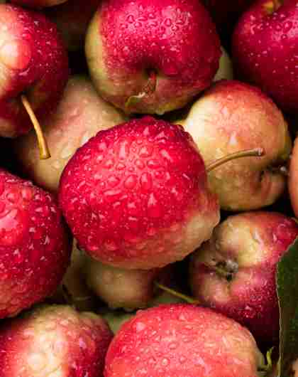 Apples from Syse Gard in Ulvik, the Hardangerfjord region in Fjord Norway