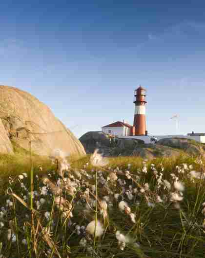A flower meadow in front of Ryvingen lighthouse in Lindesnes in Southern Norway