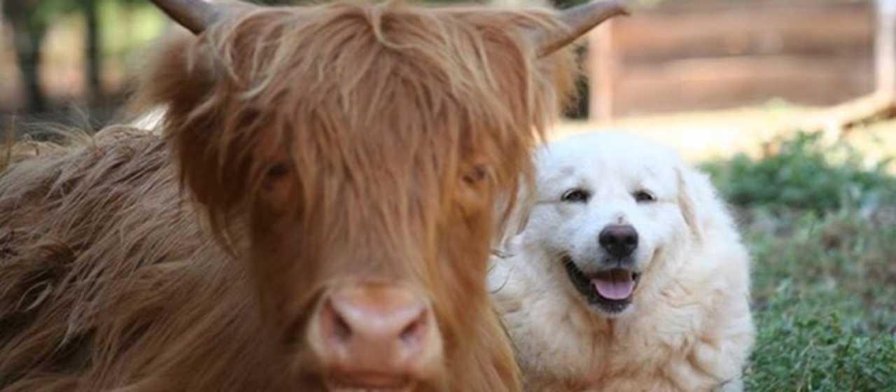 New Beginnings Farm Animals}