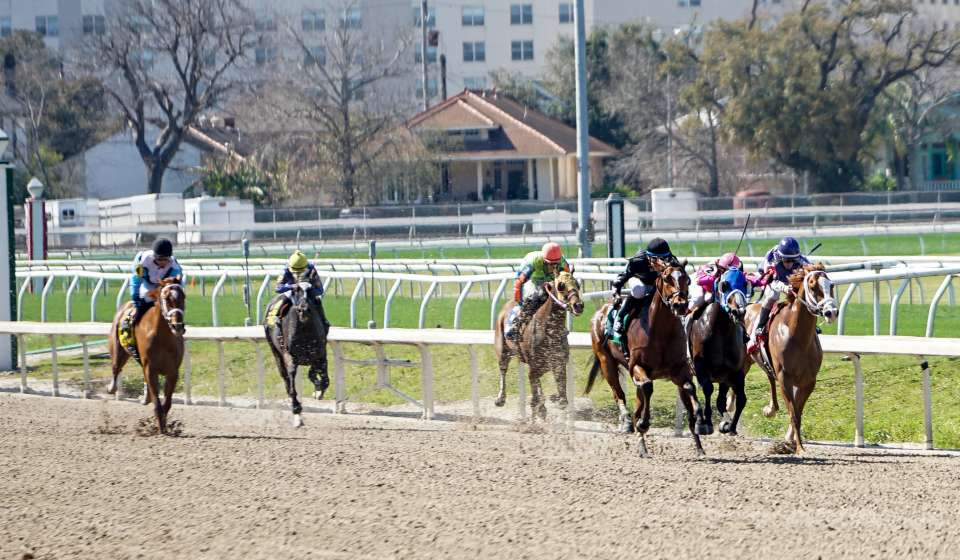 Horse Racing - Fairgrounds