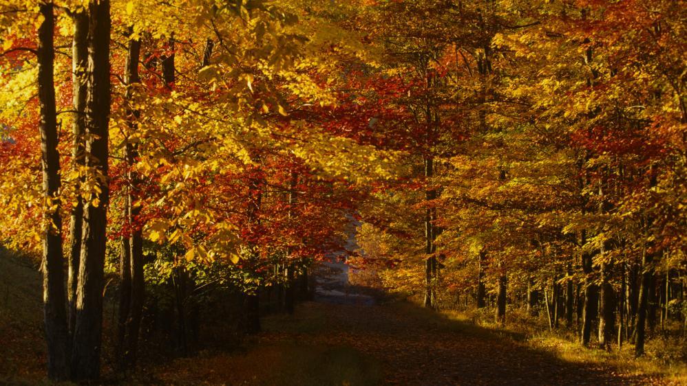 fall in nepa