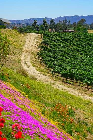 Spring in Temecula, CA