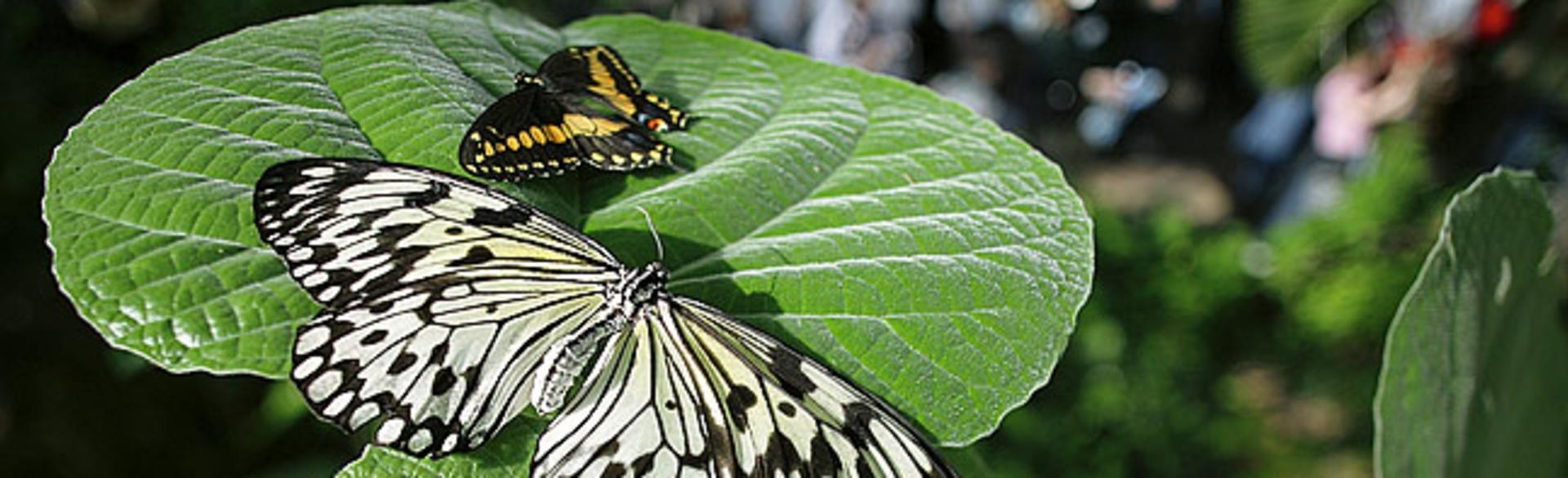 Frederik Meijer Gardens & Sculpture Park Butterflies