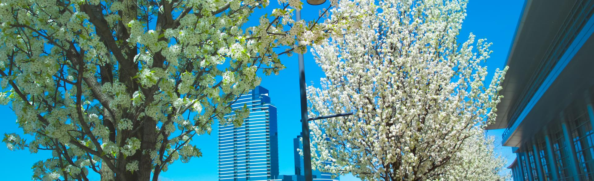 Springtime Along River and DeVos Place