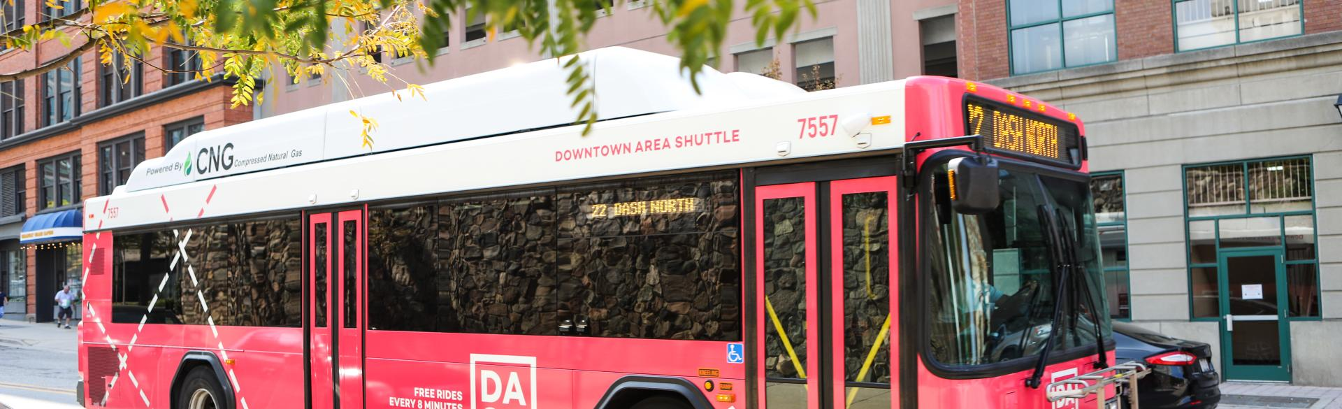 Bright pink color makes the DASH buses easy to spot.
