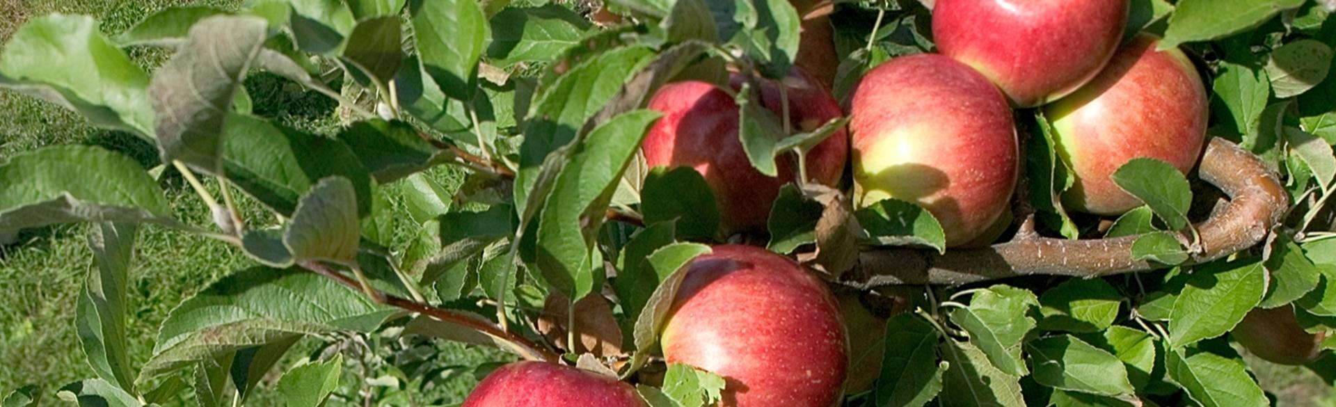 Apple Cider Locations Near Grand Rapids
