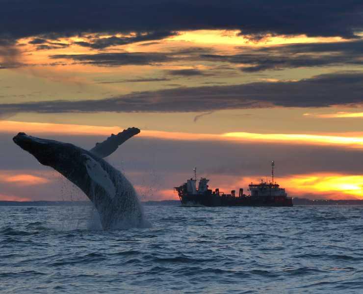 Whale Breach Oceanfront