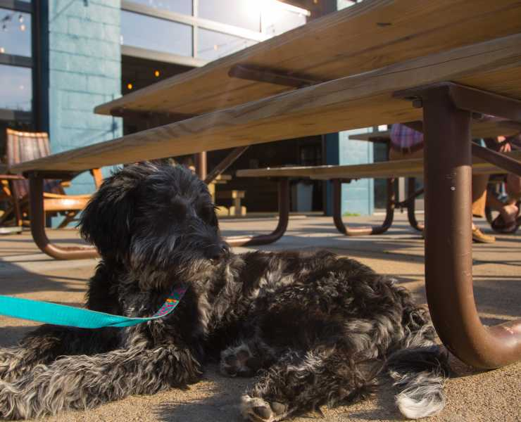 Pet Friendly Commonwealth Brewery