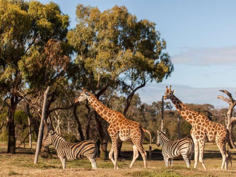 Werribee Zoo, Melbourne, Victoria