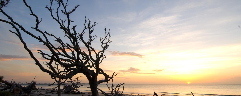 Weathered driftwood lines this hauntingly beautiful beach on Jekyll Island, Georgia