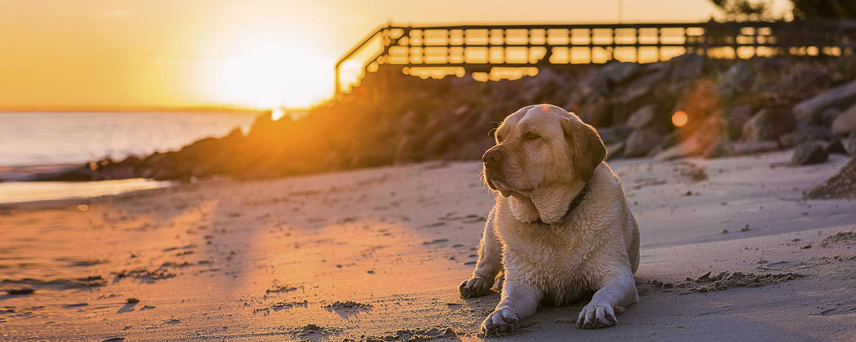 Play_Beaches_ Pet Friendly