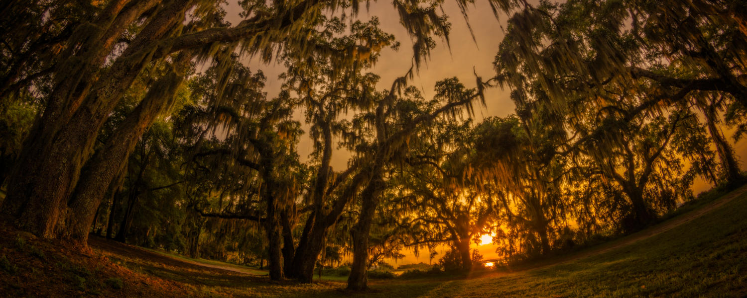 The sun sets behind the ancient live oak trees at Gascoigne Bluff on St. Simons Island, Georgia