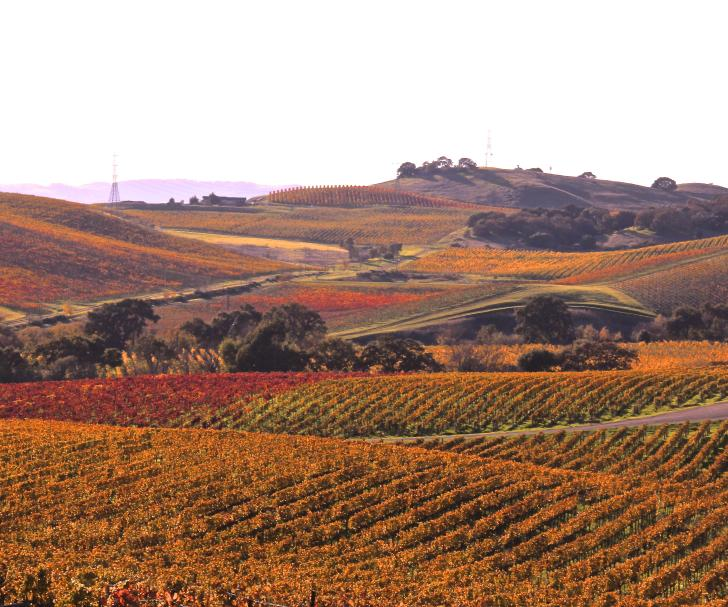 Fall Carneros Vineyards