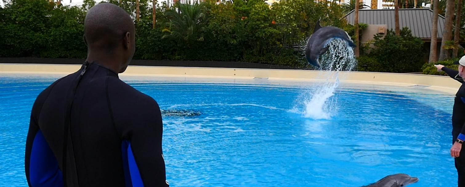 Dolphin Trainer Header