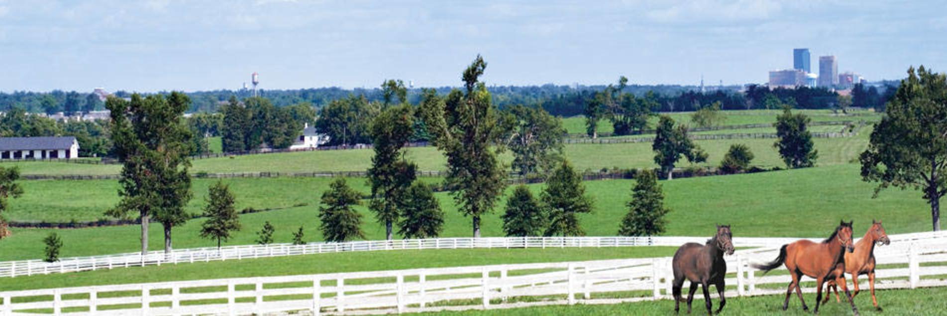 Horse Panoramic with Lexington Skyline