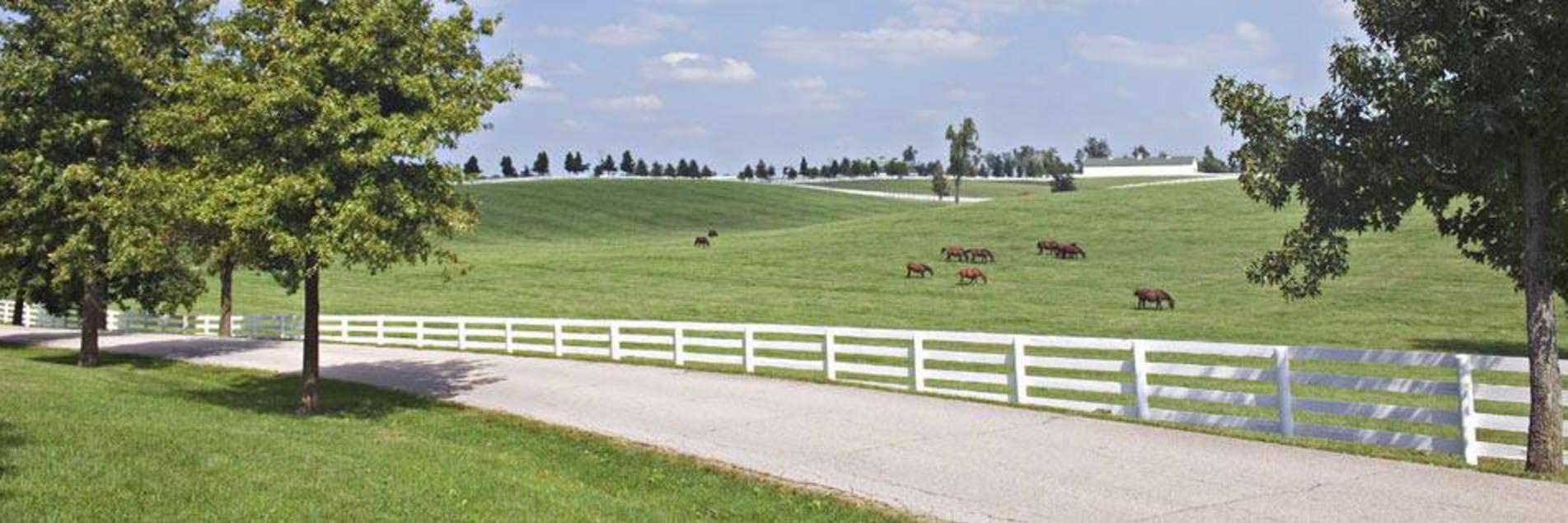 Roadside Horse Farm