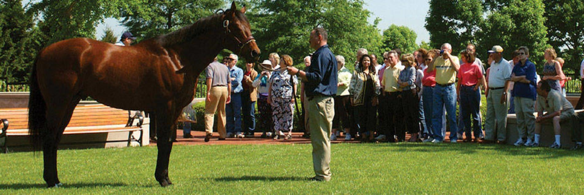 Horse Farm Tours