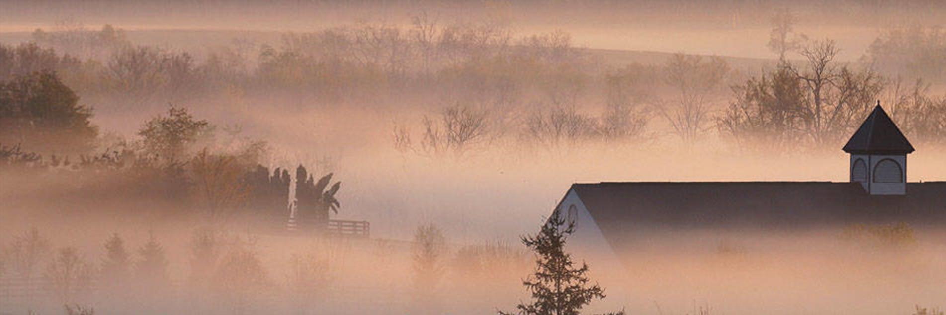 Foggy Bluegrass Morning